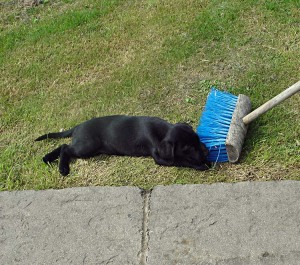 ...but this broom is quite a prickly customer!