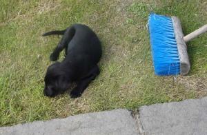Hmm, this grass is not much fun......